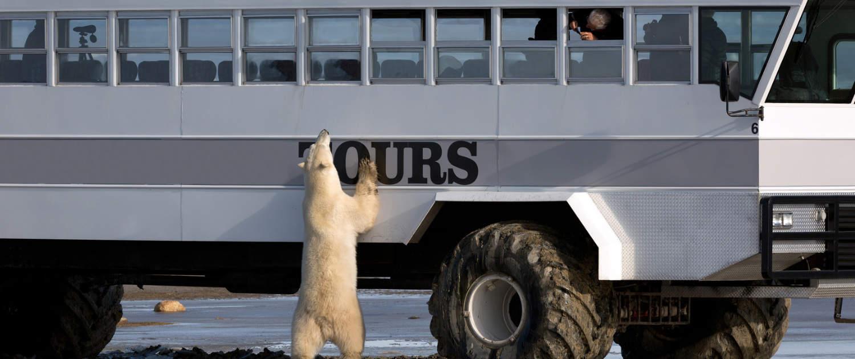 Des amortisseurs renforcés pour les bus - forts comme un boeuf !